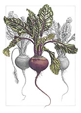 Anne Swan Beetroot