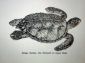 green-turtle-image