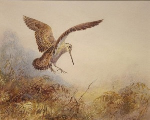 woodcock-painting