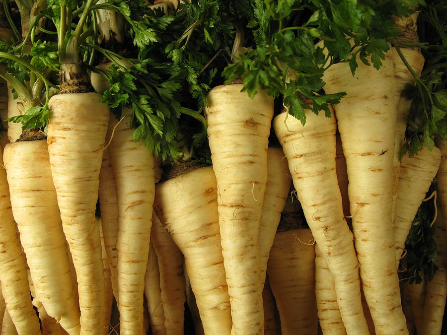Horseradish Root Dick
